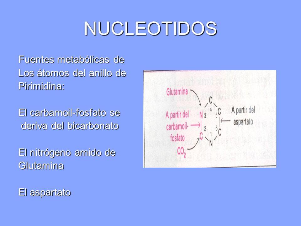 Fuentes metabólicas de Los átomos del anillo de Pirimidina: El carbamoil-fosfato se deriva del bicarbonato deriva del bicarbonato El nitrógeno amido d