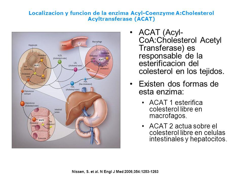 Localizacion y funcion de la enzima Acyl-Coenzyme A:Cholesterol Acyltransferase (ACAT) Nissen, S. et al. N Engl J Med 2006;354:1253-1263 ACAT (Acyl- C
