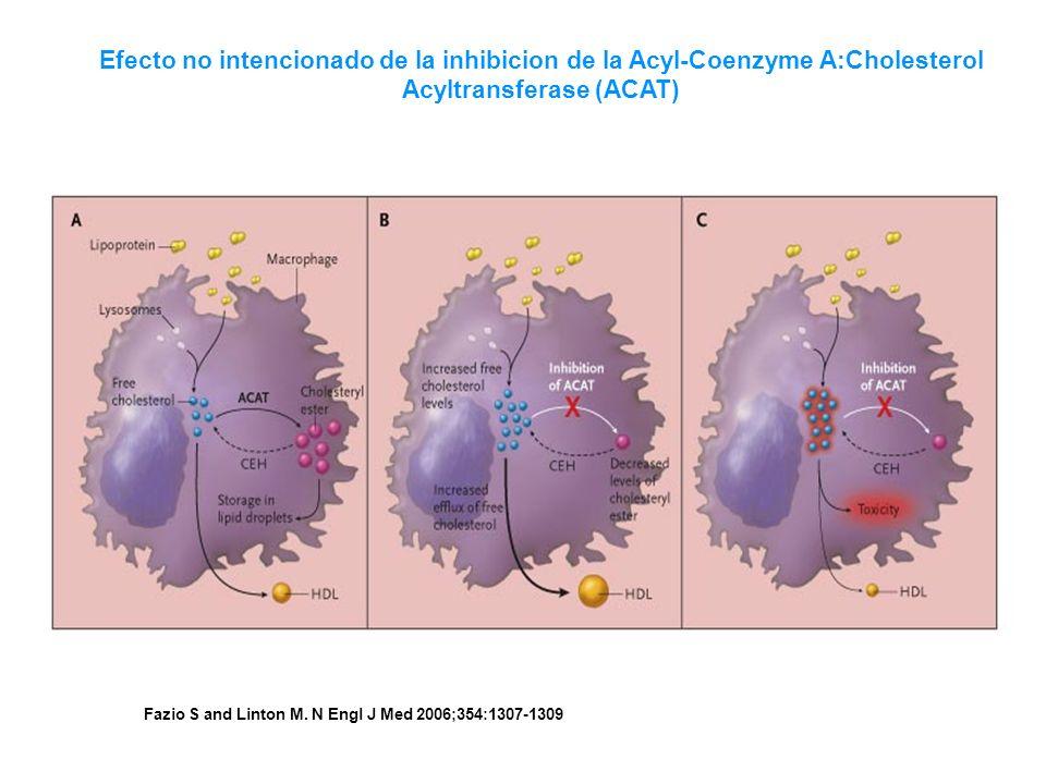 Fazio S and Linton M. N Engl J Med 2006;354:1307-1309 Efecto no intencionado de la inhibicion de la Acyl-Coenzyme A:Cholesterol Acyltransferase (ACAT)