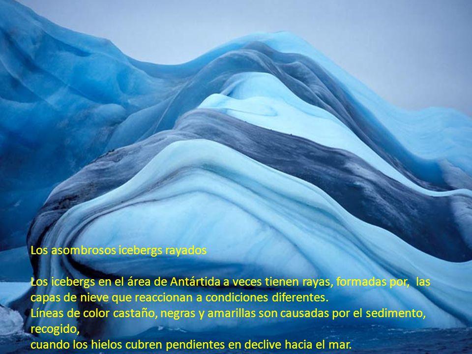 Cuando un iceberg entra en el mar, una capa de agua de mar salada puede que hiele a la parte inferior. Si esto es rico en algas, puede formar una raya