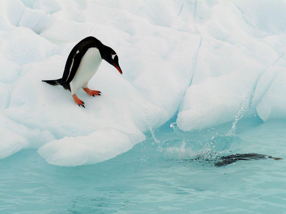 Los asombrosos icebergs rayados Los icebergs en el área de Antártida a veces tienen rayas, formadas por, las capas de nieve que reaccionan a condiciones diferentes.