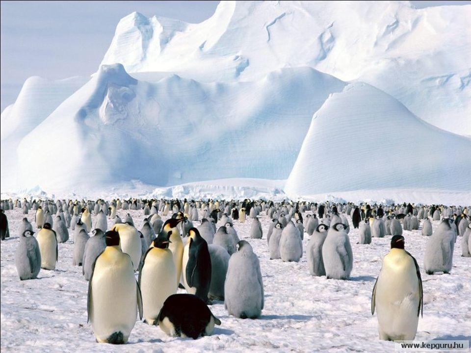 ¡Antártida, la Ola Helada Pixs - la Naturaleza es asombrosa.