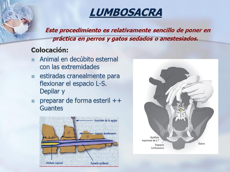 LUMBOSACRA Este procedimiento es relativamente sencillo de poner en práctica en perros y gatos sedados o anestesiados. Colocación: Animal en decúbito