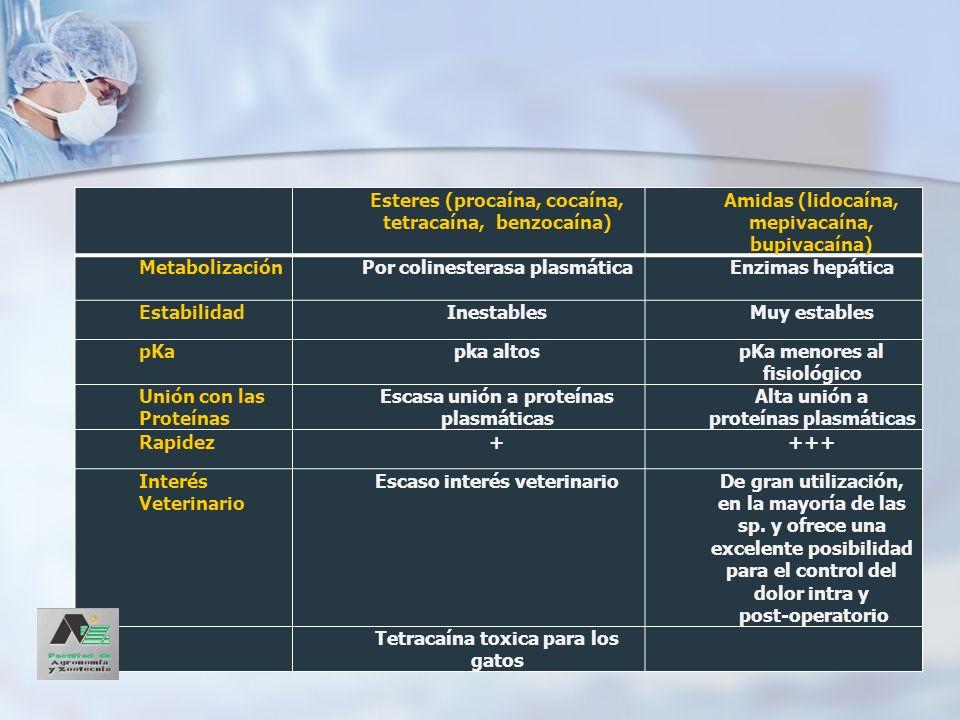 Amidas LidocaínaMepivacaínaBupivacaína Solución al0.5% - 1% ó 2% 1% y 2%0,25% - 0,5% y 0,75% IdealTécnica locoregional Anestesia epidural o espinal Tiempo de latencia 10-15 min5-10 minMuy largo (hasta 20min) Potencia++++++ DuraciónCorta (2 horas)2 horasHasta 6 horas Ds Tóxica>10 mg/kg30 mg/kg por vía IV 3 mg/kg Combinación con otras drogas Difusibilidad y reducción de la latencia: Hialuronidasa.