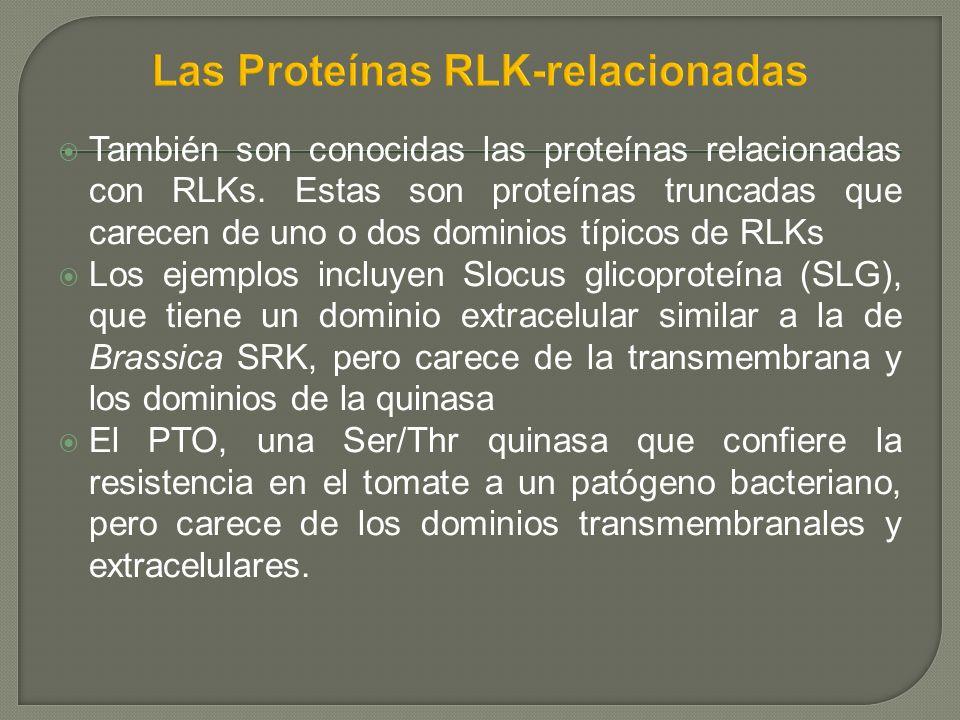 También son conocidas las proteínas relacionadas con RLKs. Estas son proteínas truncadas que carecen de uno o dos dominios típicos de RLKs Los ejemplo