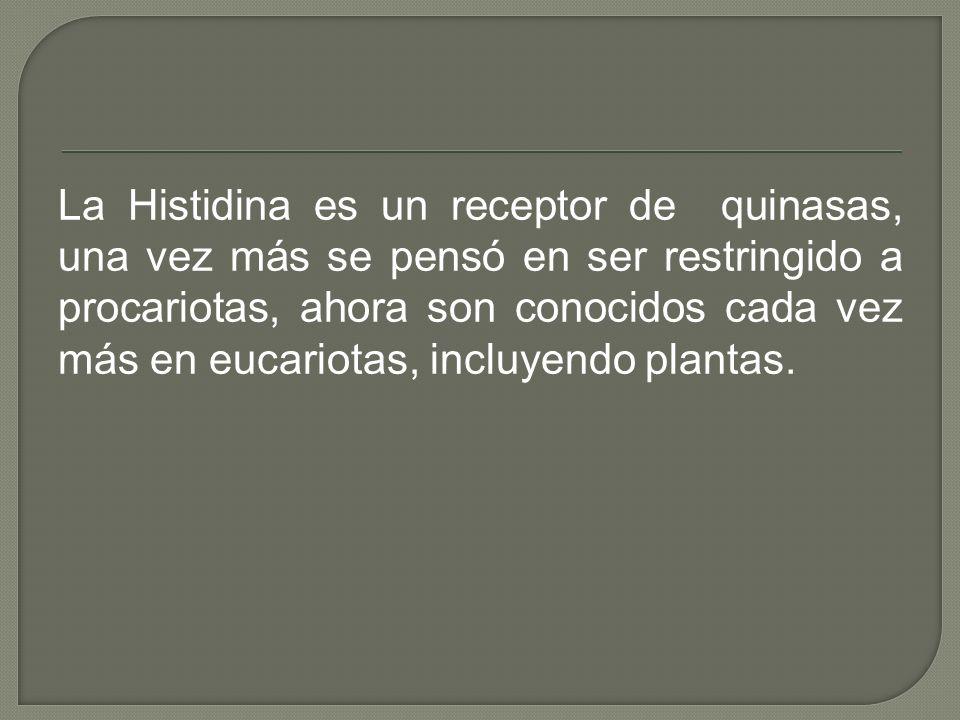 La Histidina es un receptor de quinasas, una vez más se pensó en ser restringido a procariotas, ahora son conocidos cada vez más en eucariotas, incluyendo plantas.