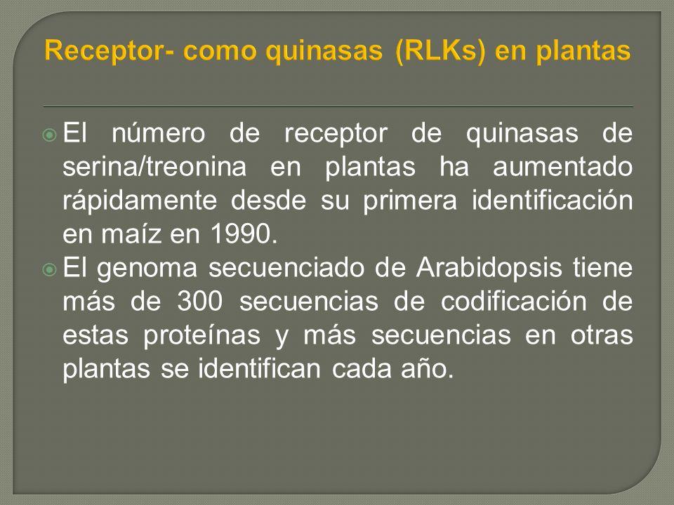 El número de receptor de quinasas de serina/treonina en plantas ha aumentado rápidamente desde su primera identificación en maíz en 1990.