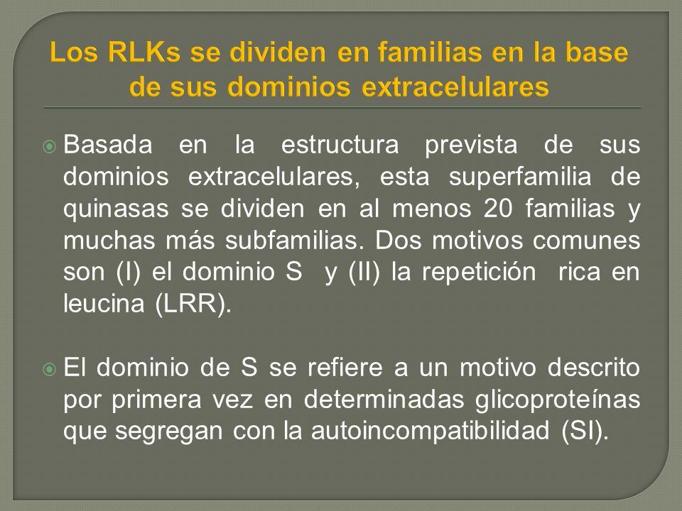 Basada en la estructura prevista de sus dominios extracelulares, esta superfamilia de quinasas se dividen en al menos 20 familias y muchas más subfamilias.