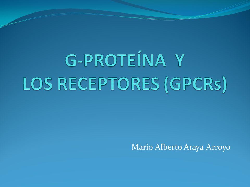 GPCRs Se encuentran en una gama amplia de organismos.