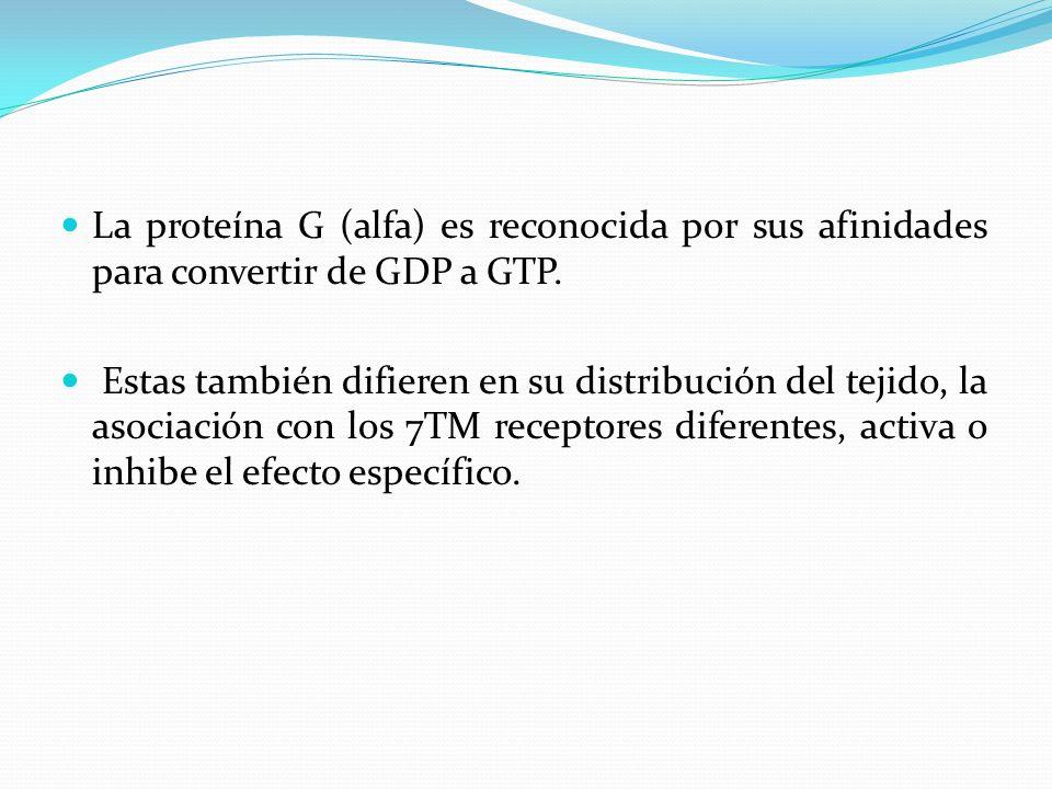 La proteína G (alfa) es reconocida por sus afinidades para convertir de GDP a GTP. Estas también difieren en su distribución del tejido, la asociación