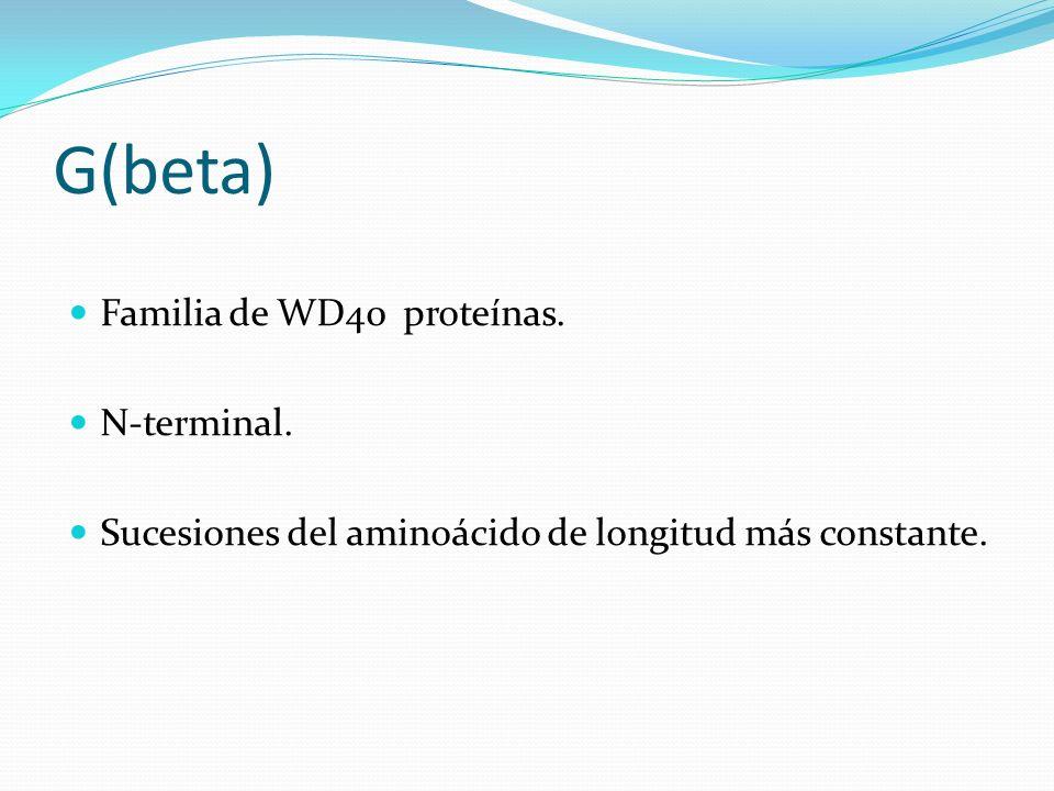 G(beta) Familia de WD40 proteínas. N-terminal. Sucesiones del aminoácido de longitud más constante.