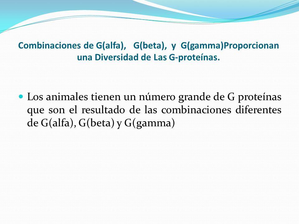 Combinaciones de G(alfa), G(beta), y G(gamma)Proporcionan una Diversidad de Las G-proteínas. Los animales tienen un número grande de G proteínas que s