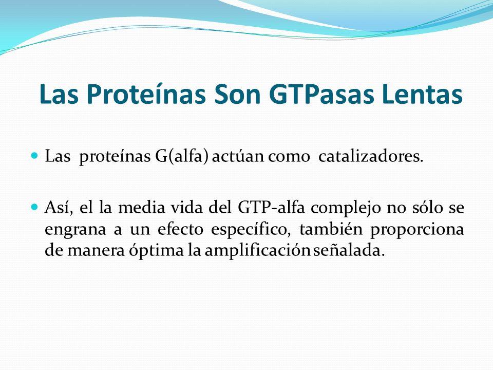 Las Proteínas Son GTPasas Lentas Las proteínas G(alfa) actúan como catalizadores. Así, el la media vida del GTP-alfa complejo no sólo se engrana a un