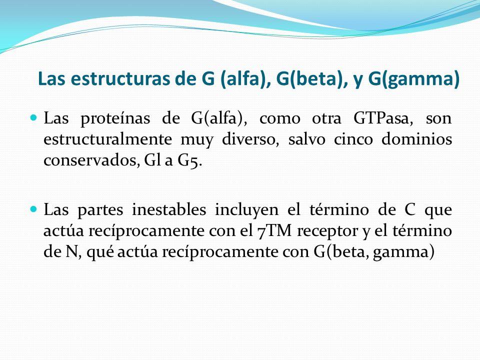 Las estructuras de G (alfa), G(beta), y G(gamma) Las proteínas de G(alfa), como otra GTPasa, son estructuralmente muy diverso, salvo cinco dominios co
