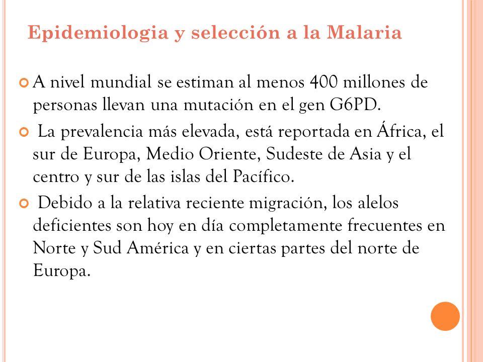 Epidemiologia y selección a la Malaria A nivel mundial se estiman al menos 400 millones de personas llevan una mutación en el gen G6PD. La prevalencia