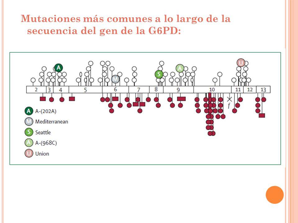 Mutaciones más comunes a lo largo de la secuencia del gen de la G6PD: