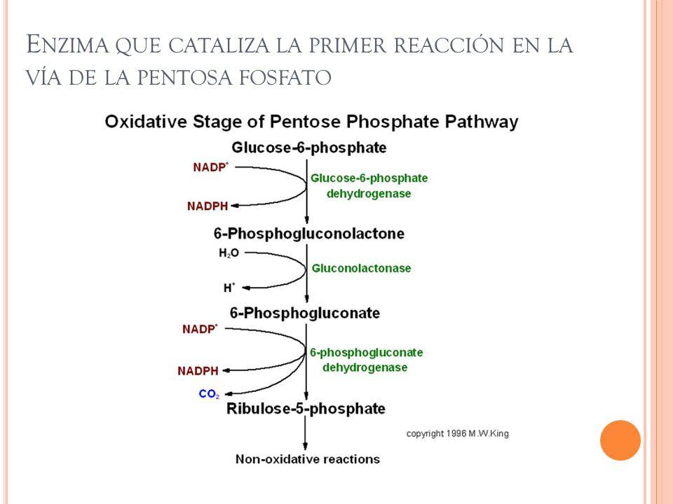Provee el poder reductor a todas las celulas en forma de NADPH.
