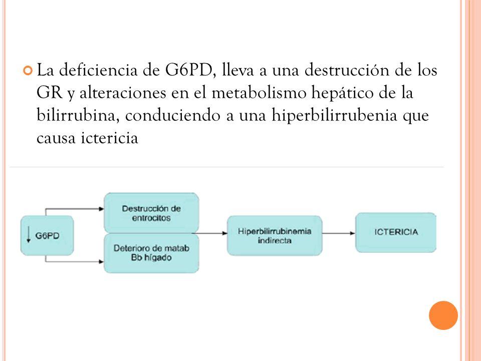 La deficiencia de G6PD, lleva a una destrucción de los GR y alteraciones en el metabolismo hepático de la bilirrubina, conduciendo a una hiperbilirrub