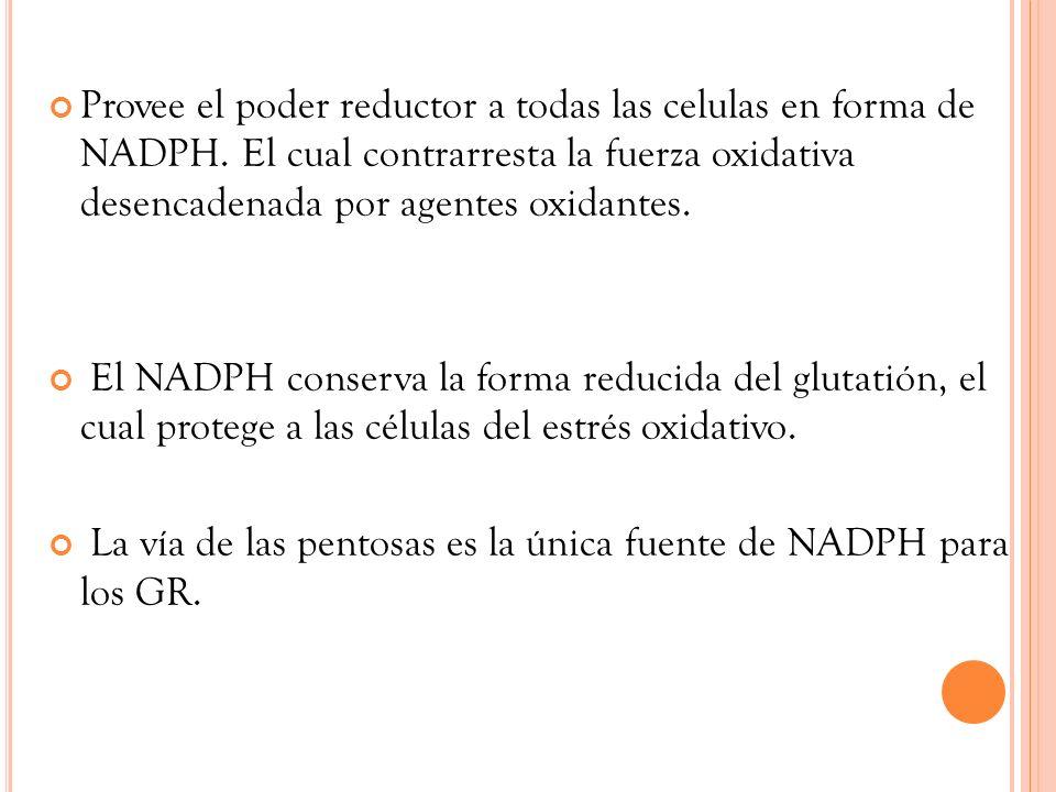 Provee el poder reductor a todas las celulas en forma de NADPH. El cual contrarresta la fuerza oxidativa desencadenada por agentes oxidantes. El NADPH