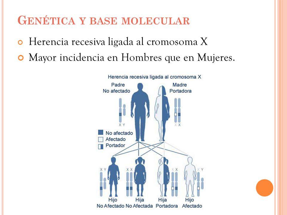 G ENÉTICA Y BASE MOLECULAR Herencia recesiva ligada al cromosoma X Mayor incidencia en Hombres que en Mujeres.