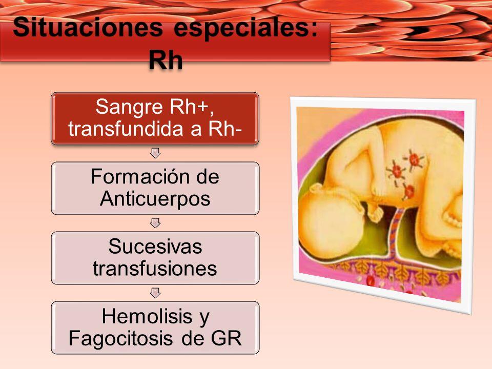 Sangre Rh+, transfundida a Rh- Formación de Anticuerpos Sucesivas transfusiones Hemolisis y Fagocitosis de GR