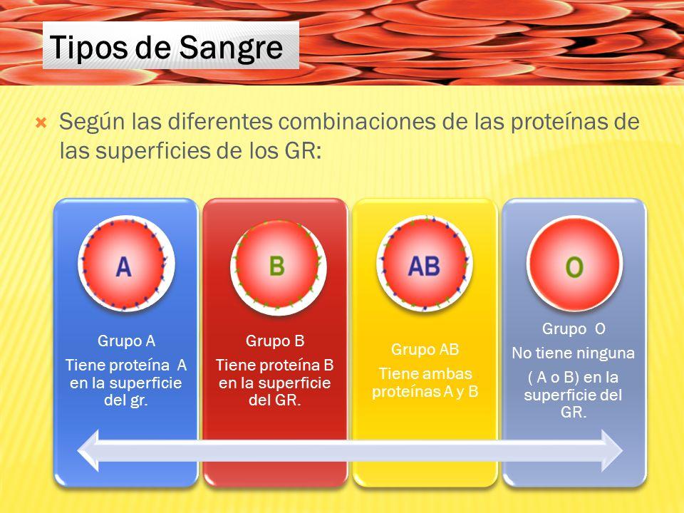 Según las diferentes combinaciones de las proteínas de las superficies de los GR: Grupo A Tiene proteína A en la superficie del gr.