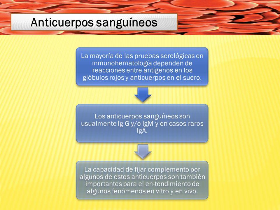 La mayoría de las pruebas serológicas en inmunohematología dependen de reacciones entre antígenos en los glóbulos rojos y anticuerpos en el suero.