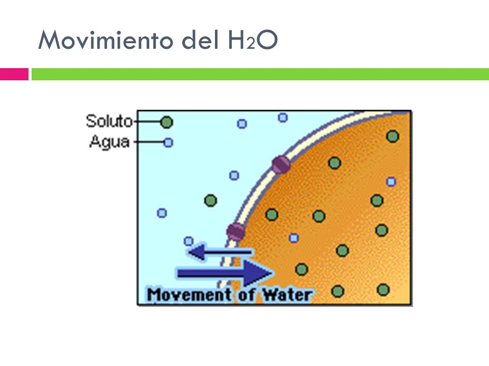 Movimiento del H 2 O