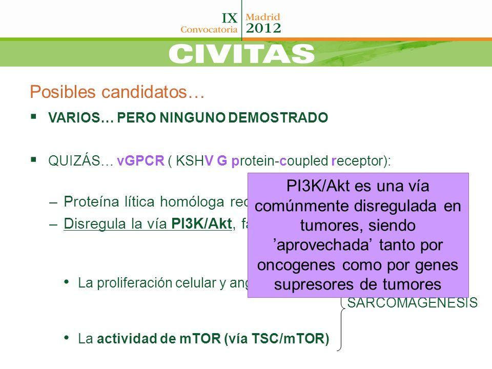 Posibles candidatos… VARIOS… PERO NINGUNO DEMOSTRADO QUIZÁS… vGPCR ( KSHV G protein-coupled receptor): –Proteína lítica homóloga receptor IL-8 –Disreg