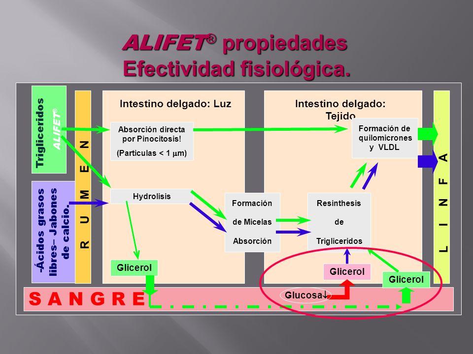 ALIFET ® propiedades Efectividad fisiológica. S A N G R E Trigliceridos ALIFET ® -Ácidos grasos libres– Jabones de calcio. R U M E N L I N F A Intesti