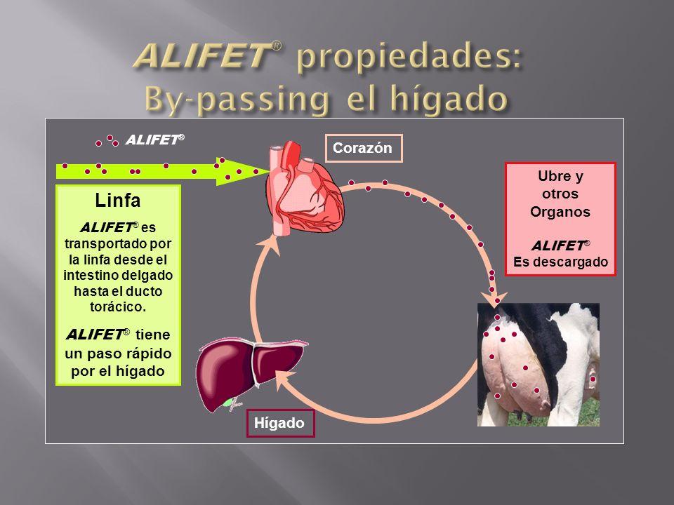 Blood Circulation Hígado Corazón Ubre y otros Organos ALIFET ® Es descargado Linfa ALIFET ® es transportado por la linfa desde el intestino delgado ha