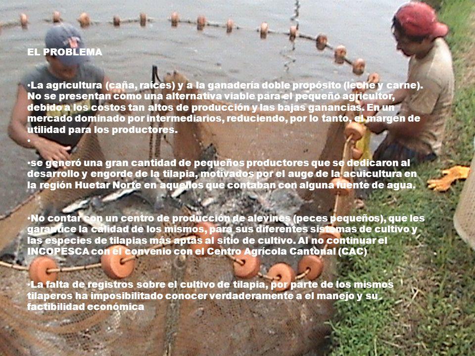 EL PROBLEMA La agricultura (caña, raíces) y a la ganadería doble propósito (leche y carne). No se presentan como una alternativa viable para el pequeñ