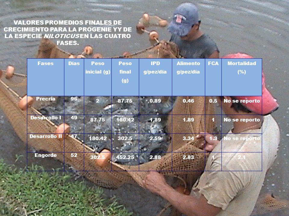 FasesDías Peso inicial (g) Peso final (g) IPD g/pez/día Alimento g/pez/día FCA Mortalidad (%) Precria96 287.750.890.460.5No se reporto Desarrollo I49
