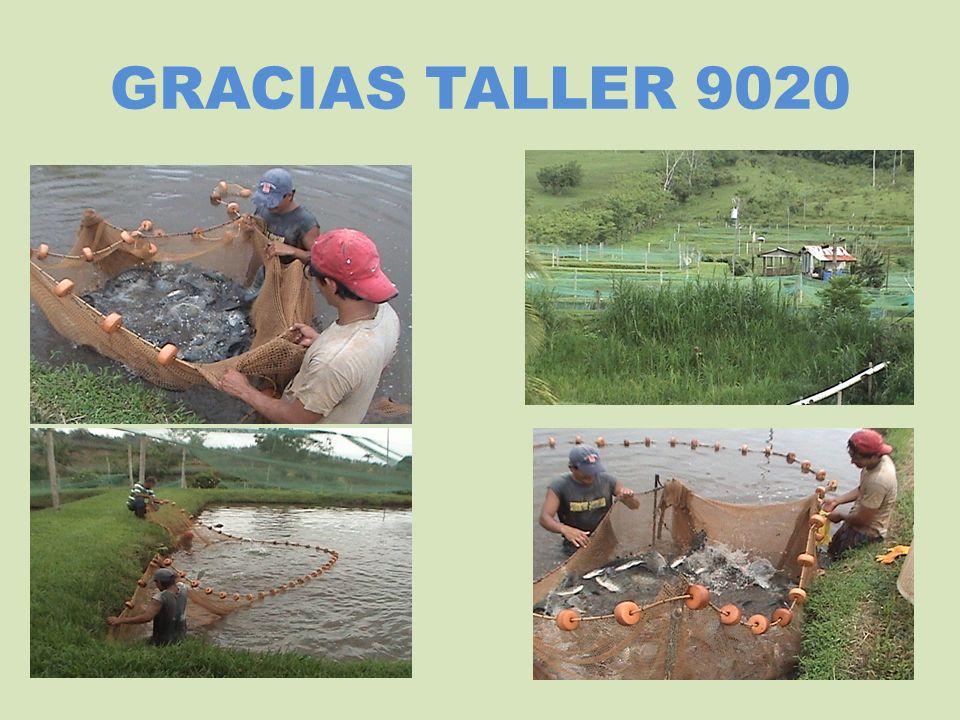 GRACIAS TALLER 9020
