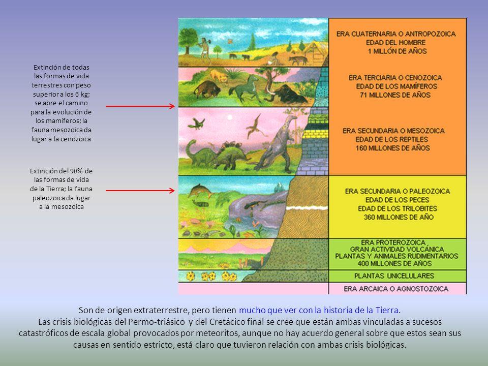 Extinción de todas las formas de vida terrestres con peso superior a los 6 kg; se abre el camino para la evolución de los mamíferos; la fauna mesozoic