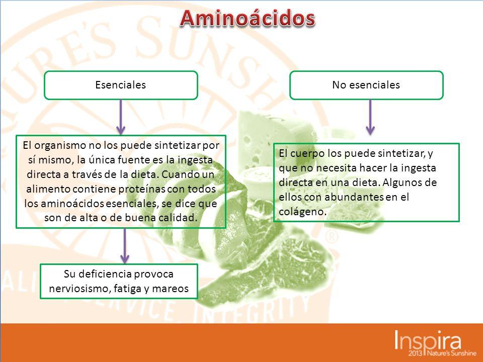 EsencialesNo esenciales El organismo no los puede sintetizar por sí mismo, la única fuente es la ingesta directa a través de la dieta.