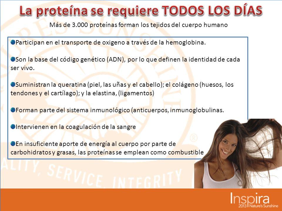 Más de 3.000 proteínas forman los tejidos del cuerpo humano Participan en el transporte de oxigeno a través de la hemoglobina.