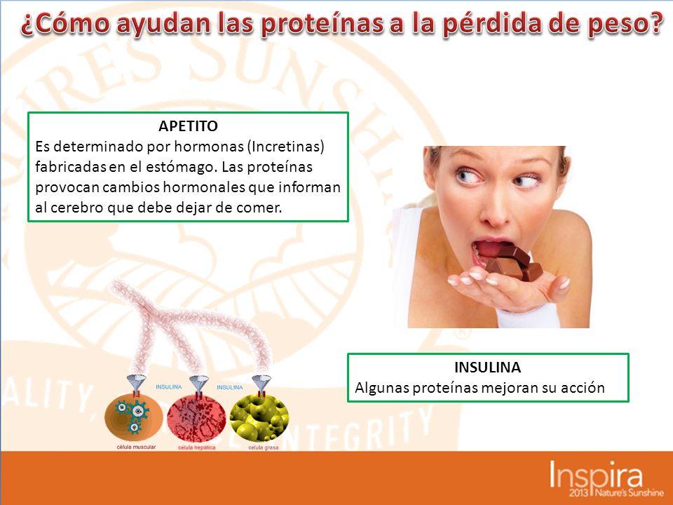 APETITO Es determinado por hormonas (Incretinas) fabricadas en el estómago.