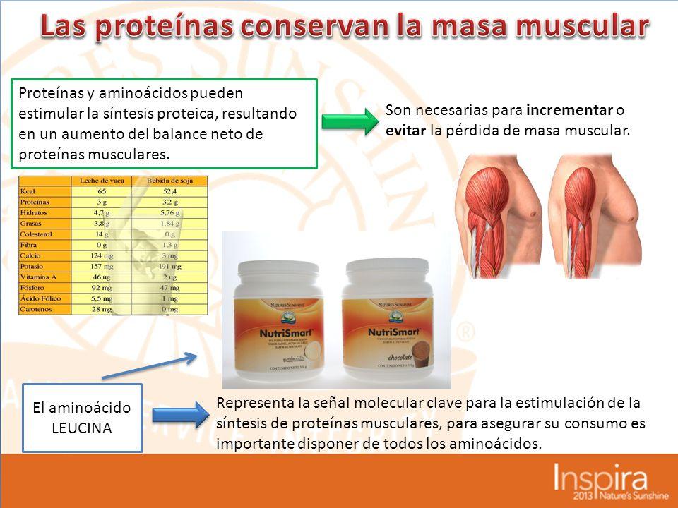 Proteínas y aminoácidos pueden estimular la síntesis proteica, resultando en un aumento del balance neto de proteínas musculares.