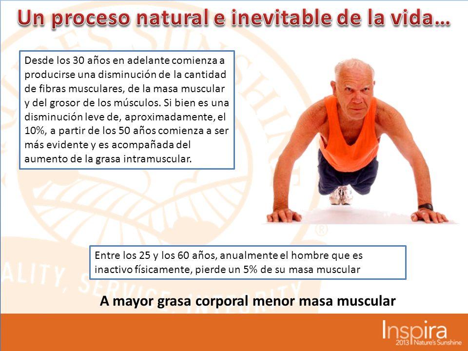 Desde los 30 años en adelante comienza a producirse una disminución de la cantidad de fibras musculares, de la masa muscular y del grosor de los músculos.