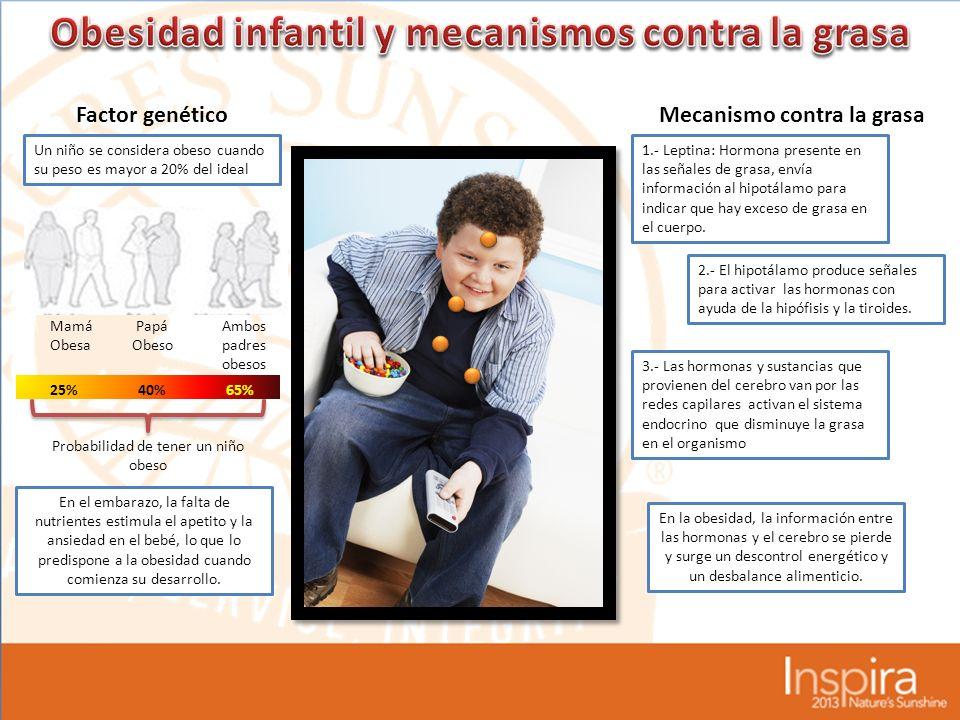 Factor genéticoMecanismo contra la grasa Un niño se considera obeso cuando su peso es mayor a 20% del ideal Mamá Obesa Papá Obeso Ambos padres obesos 25%40%65% En la obesidad, la información entre las hormonas y el cerebro se pierde y surge un descontrol energético y un desbalance alimenticio.