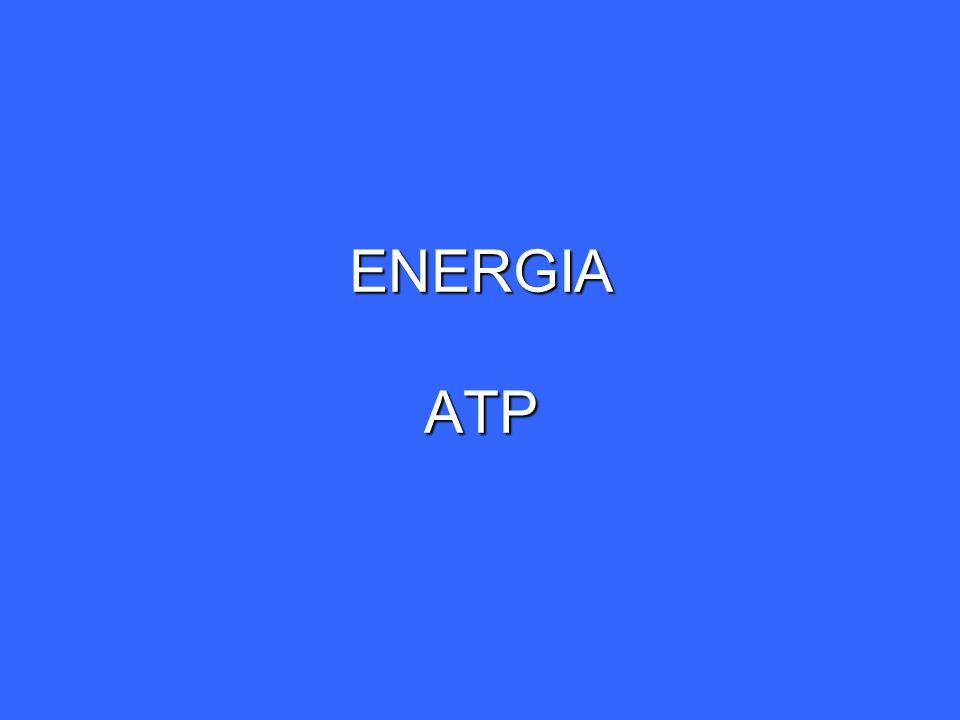 ENERGIA LA CADENA DE TRANSPORTE ELECTRONICO (CADENA RESPIRATORIA) COMPONENTES Membrana mitocondrial interna.