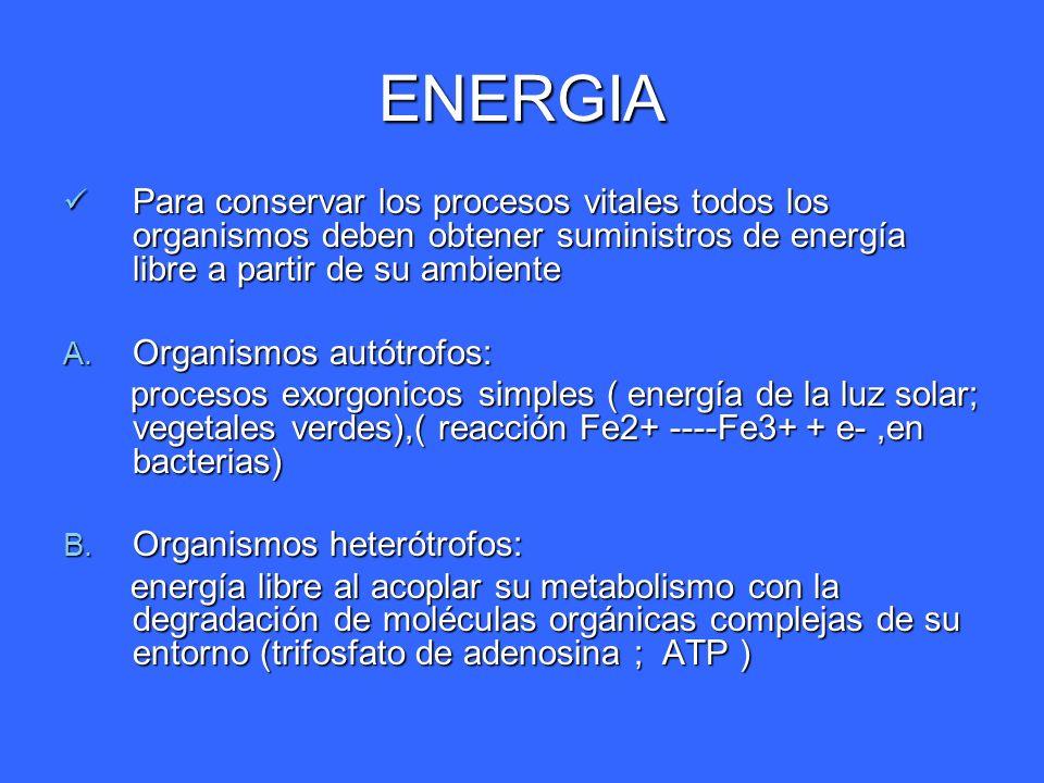ENERGIA Para conservar los procesos vitales todos los organismos deben obtener suministros de energía libre a partir de su ambiente Para conservar los