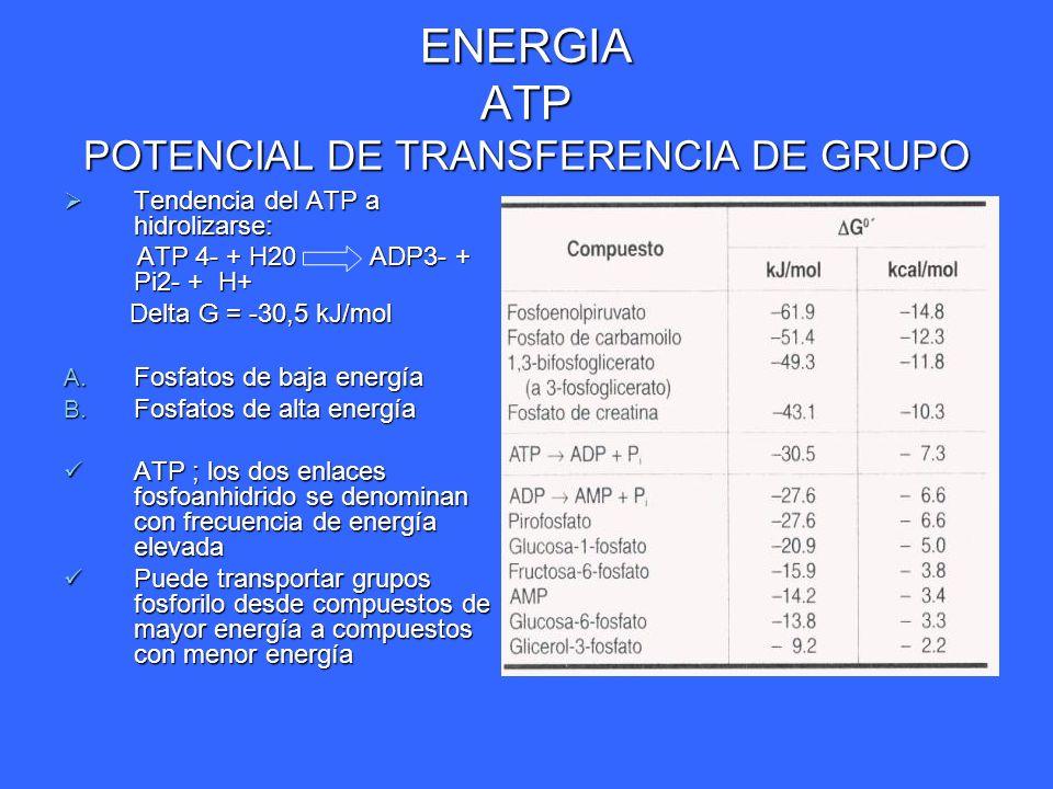 ENERGIA ATP POTENCIAL DE TRANSFERENCIA DE GRUPO Tendencia del ATP a hidrolizarse: Tendencia del ATP a hidrolizarse: ATP 4- + H20 ADP3- + Pi2- + H+ ATP