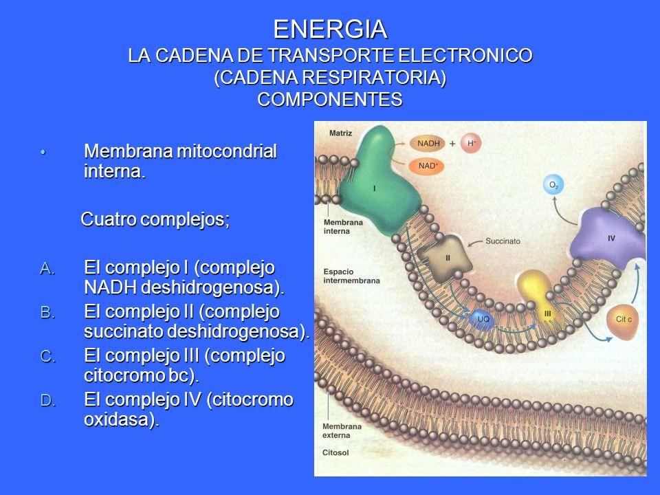 ENERGIA LA CADENA DE TRANSPORTE ELECTRONICO (CADENA RESPIRATORIA) COMPONENTES Membrana mitocondrial interna. Membrana mitocondrial interna. Cuatro com
