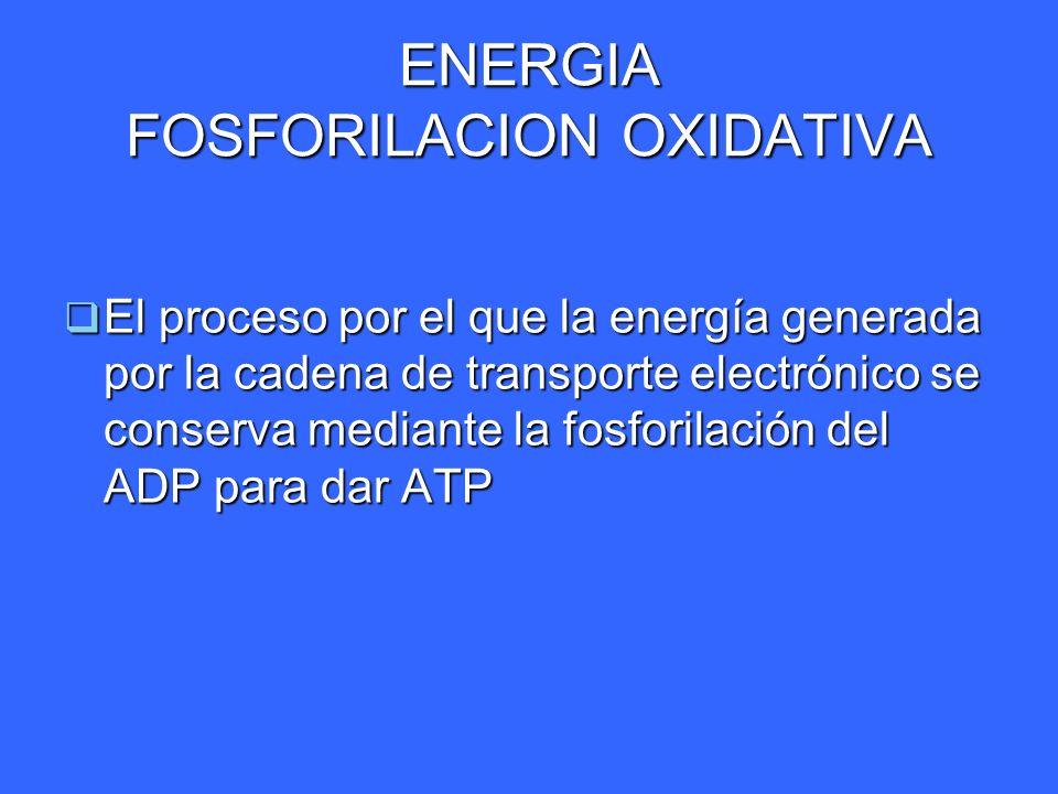 ENERGIA FOSFORILACION OXIDATIVA El proceso por el que la energía generada por la cadena de transporte electrónico se conserva mediante la fosforilació