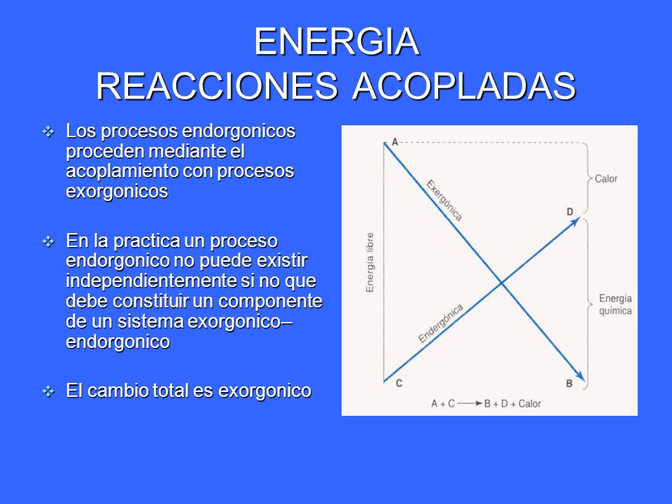 ENERGIA METABOLISMO Catabolismo ; Catabolismo ; las reacciones exergonicas las reacciones exergonicas Degradación u oxidación de las moléculas del combustible Degradación u oxidación de las moléculas del combustible Se genera energía Se genera energía Anabolismo ; Anabolismo ; Reacciones de síntesis de moléculas complejas Reacciones de síntesis de moléculas complejas Reacciones endorgonicas, consume energía Reacciones endorgonicas, consume energía Metabolismo; Metabolismo; o La suma de el anabolismo mas el catabolismo