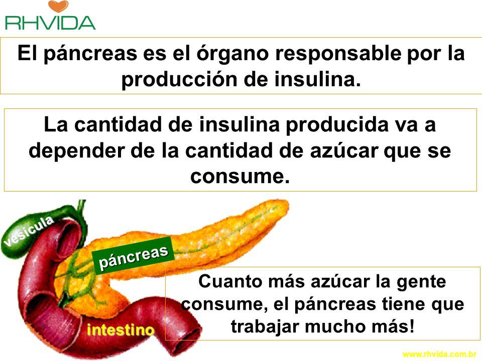 Copyright © RHVIDA S/C Ltda. www.rhvida.com.br páncreas intestino vesícula El páncreas es el órgano responsable por la producción de insulina. Cuanto