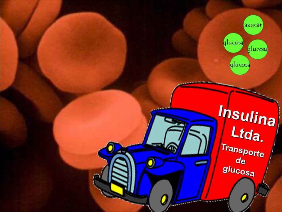 Copyright © RHVIDA S/C Ltda. www.rhvida.com.br glucosa azucar glicose Insulina Ltda. Ltda. Transportedeglucosa