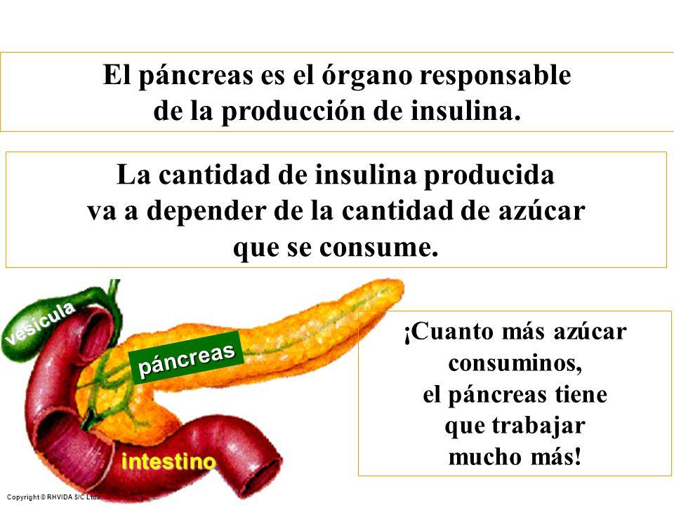 Copyright © RHVIDA S/C Ltda. páncreas intestino vesícula El páncreas es el órgano responsable de la producción de insulina. ¡Cuanto más azúcar consumi